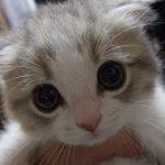 A La Inteligencia Artificial de Google Le Gustan los Gatos
