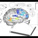 El cerebro simulado más complejo de la historia: Spaun